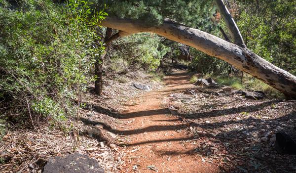A hiking trail